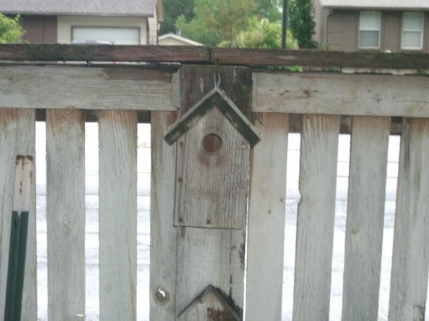woodpecker bird house plans