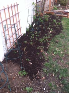 composted strawberries